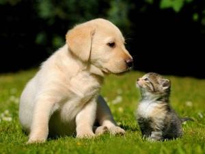 Imagenes tiernas de perros y gatos