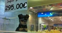 perro en tienda